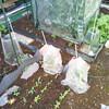庭の家庭菜園、今年もちょっと工夫