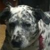 【厳選!】犬好きにオススメしたい絵本3選【犬好きホイホイ】