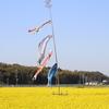 【風景写真】一人菜の花祭り!朝っぱらから春を感じてきました!!