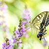 【ハチの賢さと愚かさ】ファーブル昆虫記 第4巻「キゴシジガバチ」に対する実験