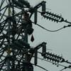高圧鉄塔に鳶作業者が数人登っていて