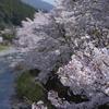 ひょうたん桜3