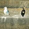 TokyoWaterTaxiで東京湾の鳥見♪2