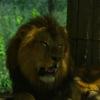 【動物園】姫路セントラルパークへ行ってきました~1~