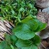 山菜ナムル