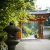 三室戸寺へ蓮を撮りに