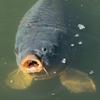 無料で釣りができる!?郷土の森公園『つり池』に行ってきた!つり竿、エサ、タモ網すべて無料で貸してもらえる