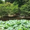 御髪神社~ハスの池のほとりに佇む日本で唯一の髪の神社~