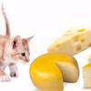 猫がチーズを食べる!大丈夫なの?