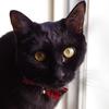 今日の黒猫モモ&白黒猫ナナの動画ー604