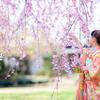 七五三写真ならロケーション撮影@越谷花田苑 竹と桜の日本庭園が美しすぎる