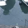雨天翌日の鯛ラバ釣行は、濁りと漂流物でいっぱいでした。