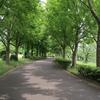 荒子川公園 2020.5.25