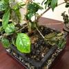 植物の生命力の驚きます。人間も植物に見習ってコロナをやっつけましょう。