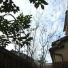 庭の二つの木と、結婚10年で 思うこと