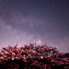 桜巡り2018④ 長野県 南信地方の桜と星空