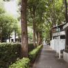 霞ヶ関の緑