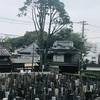 雨の谷中のヒマラヤ杉 東京大空襲の慰霊碑 鴎外荘の錦鯉
