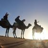 砂漠ツアー「ラクダは楽じゃない」