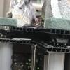 初心者でもDIYで滝のあるアクアテラリウム(練習)   〜土台水漏れ修復編〜