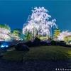 【過去写真】東寺の夜桜