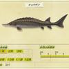 【あつ森】「チョウザメ」の釣れる場所・出現時期・時間帯情報まとめ【あつまれどうぶつの森】