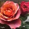 """【庭】Rosa.min """" Napoli Forever """""""