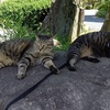 暑い日の猫散歩と真竹攻略開始
