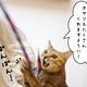 猫の初詣とお年玉