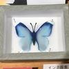 インクの新しい楽しみ方「インク蝶」