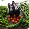 夏野菜ごろごろの、ねここの畑