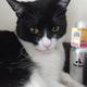 今日の黒猫モモ&白黒猫ナナの動画ー791