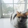 【第1弾】実家の家族・猫ちゃんとちょこちゃんを対面させてみた。