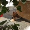 ミコノス島は猫だらけ?ミコノスタウンの景色と猫たち2(世界の猫探し101~109匹目)