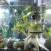 水槽陶芸の世界開拓。多肉植物水耕栽培と陶器と観賞魚水槽。