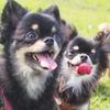 どうすれば犬はしつけを覚えてくれる?絶対知っておくべき3つの学習法!