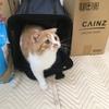 子猫と二人暮らし