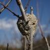 スズバチの巣を見つけたり、ハスイモを初めて食べたりしたこと
