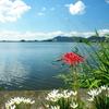 滋賀県 西の湖 第2弾