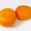 冬柑橘がおいしい季節