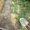 わくわくの自然農法を取り入れて ☆ 人参の種蒔き・ジャガイモ植えと燻炭作り、時々カエル