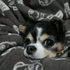 #009 夜な夜な犬に悩みを打ち明ける