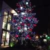 吉祥寺L.L.BEAN前のクリスマスツリーは美しい