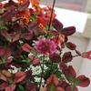 クローバーの花たち