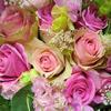 春色のバラ (ハートローズ)