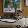 プーチンさのお薬と信頼関係 ~猫には言葉は通じなくてもココロは通じるんだと思う~