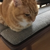 猫の箱座り