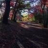 秋深まる伊香保森林公園から水沢山