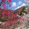 園原~花桃の里~