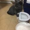 生後三ヶ月の子猫に与える餌の量がわからない!